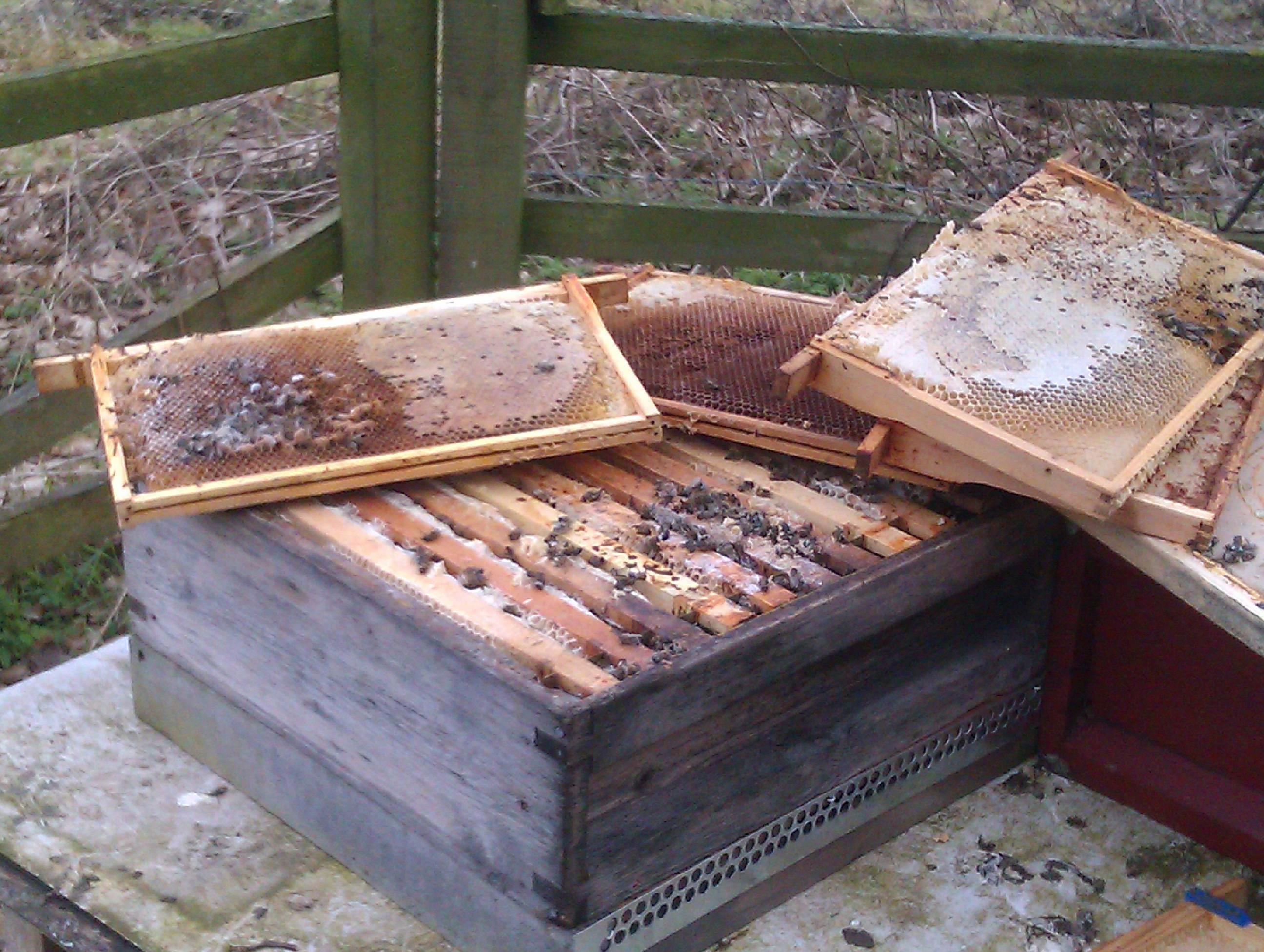 Mid bucks beekeepers study notes